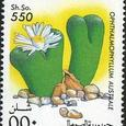 Opthalmophyllum australe 1995