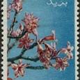 Adenium somalense 1955