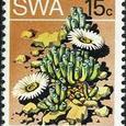 Fenestraria aurantiaca 1973