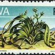 Welwitschia mirabilis 1973
