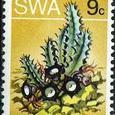 Huernia oculata 1973