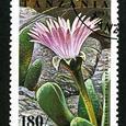 Cerochlamys pachyphylla 1995
