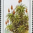 Aloe arborescens 1986