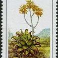 Aloe maculata 1986