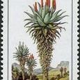 Aloe ferox 1986