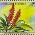 Aloe arborescens 2010
