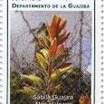 Aloe vulgaris 2009