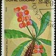 Euphorbia milii 1983