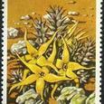 Caralluma lutea 1977