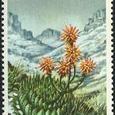 Aloe polyphylla 1977