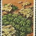 Euphorbia pulvinata 1977