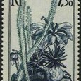 Didierea madagascariensis 1954