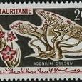 Adenium obesum 1965