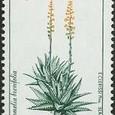 Bromelia brevifolia 1996