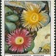 Argyroderma roseum 1983