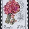 Hoodia macrantha 1994