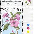 Adenium boehmianum 1997