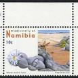 Namibia cinerea 2008
