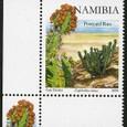 Euphorbia virosa 2008