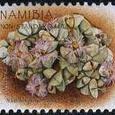 Namibia ponderosa 2007