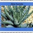 Aloe humilis 2003