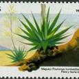 Fourcroya humboldtiana 1982