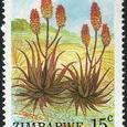 Aloe cameronii var. bondana 1988
