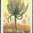 Euphorbia fortissima 1988