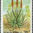 Aloe aculeata 1988