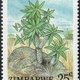 Euphorbia wildii 1988