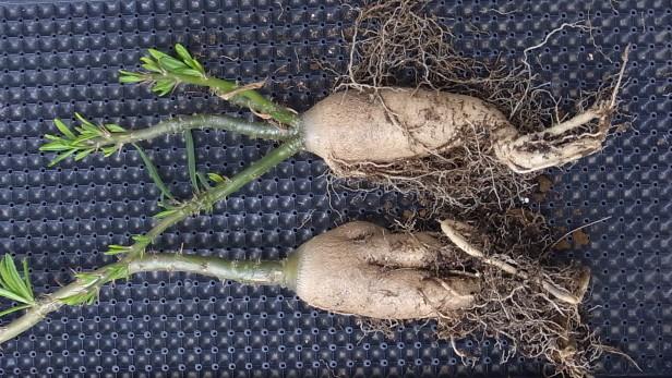 Succulentum1604cocolog