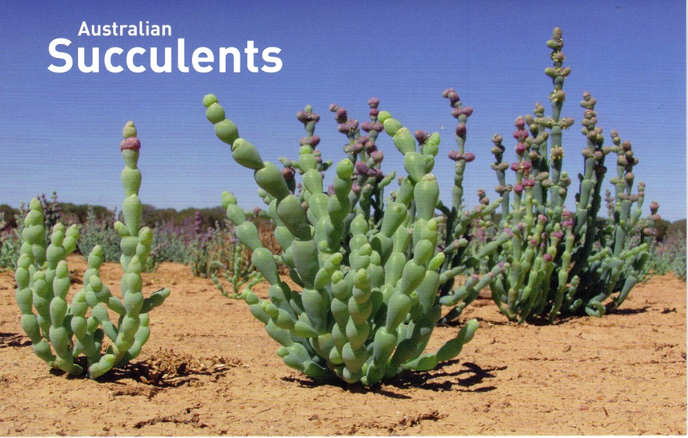 Australian_succulents_2