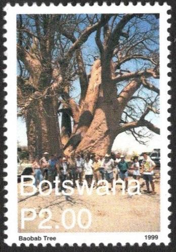 Botswanabaobab1999