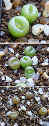 Greensoapstone1402cocolog