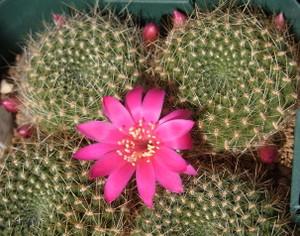 Violaciflora1702cocolog