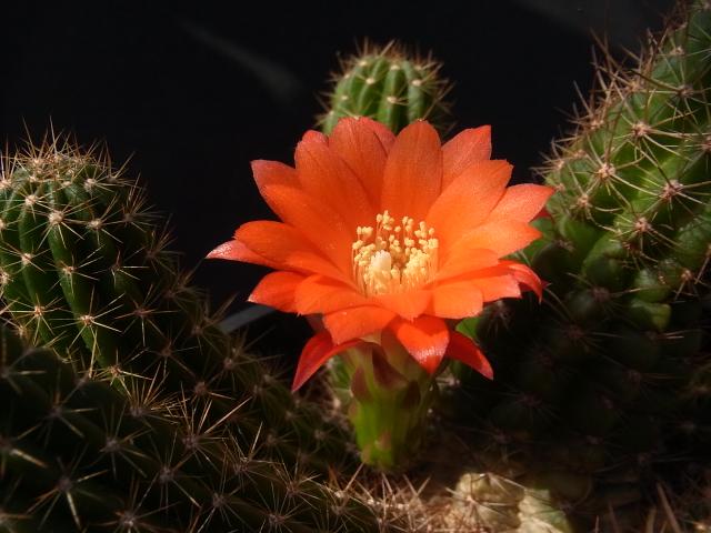 Miniatiflora1704cocolog
