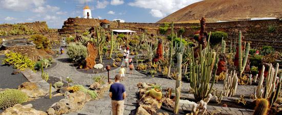The_cactus_garden